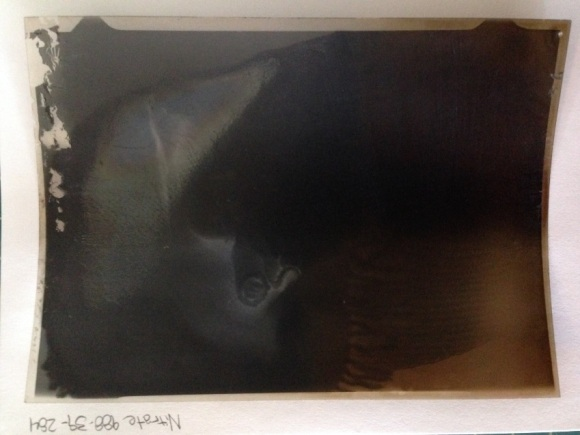 Example of nitrate deterioration level 2. Image is yellowing and beginning to mirror.  Photo credit: Amanda Oliver